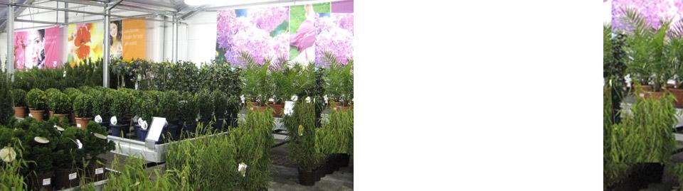 Bayerische blumen zentralen ber uns historie for Blumen zentrale parsdorf