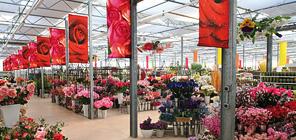 Bayerische Blumen Zentralen Ber Uns Unternehmensgruppe